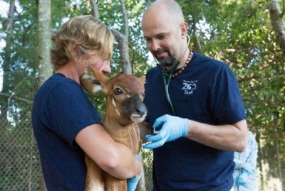 Dr. Jb Minter | Chief Veterinarian, North Carolina Zoo