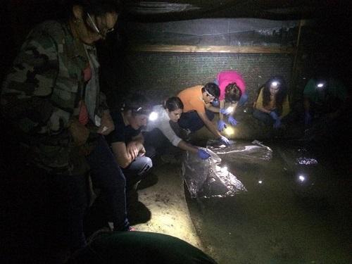 North Carolina Zoo Sends Puerto Rican Toad Tadpoles Back to Their Natural Habitat