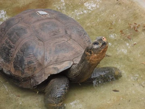 Iconic Tortoise from North Carolina Zoo's Past Dies in Florida