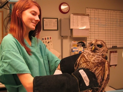 Volunteer Opportunities Abound at the North Carolina Zoo