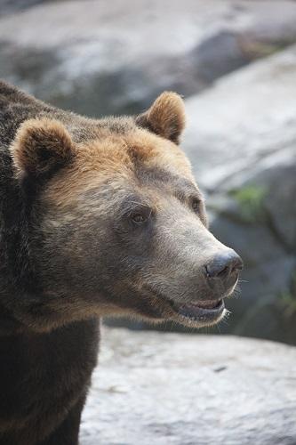 It's a Bear-y Good Saturday to Visit the North Carolina Zoo
