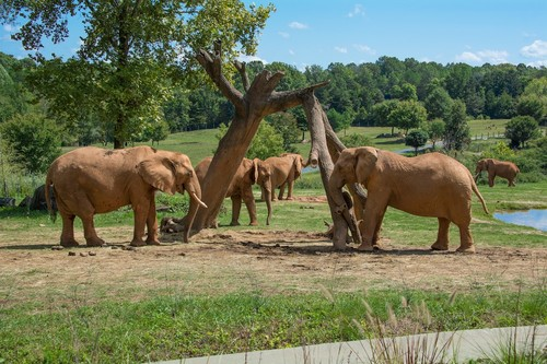 The North Carolina Zoo Will Open to the Public June 15. Online Timed Ticketing Available Now