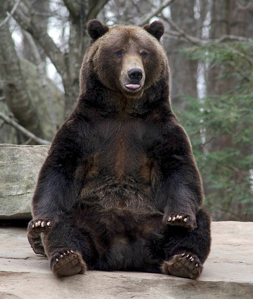 North Carolina Zoo Mourns the Loss of 'Amazing, Goofy' Grizzly Bear