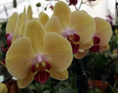 Seagrove Orchids