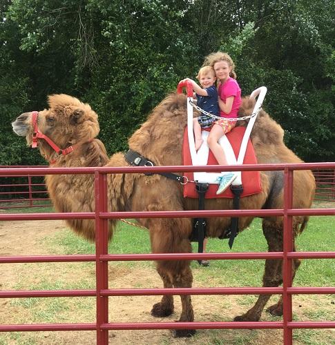 Carolina Camel Rides