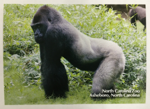 North Carolina Zoo Postcard